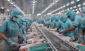 Doanh nghiệp Đồng bằng Sông Cửu Long bị giảm hơn 80% đơn hàng do dịch COVID-19