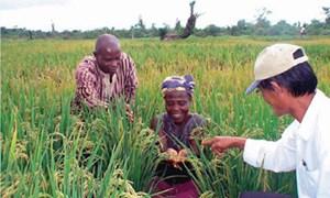 Châu Phi vẫn là thị trường tiềm năng của Việt Nam bất chấp đại dịch