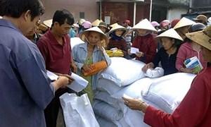 Hơn 1.000 tấn gạo hỗ trợ tỉnh Cao Bằng trong dịp giáp hạt