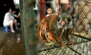 Xử lý nghiêm hành vi mua bánđộng vật hoang dãtrái pháp luật