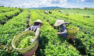 Hiện trạng phát triển của doanh nghiệp nhỏ và vừa trên địa bàn TP. Thái Nguyên
