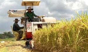 Thị trường nông sản tuần qua: Giá lúa gạo tăng, càphê và tiêu lao dốc