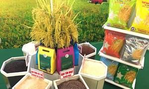 Giá gạo Việt Nam xuất khẩu vượt qua Thái Lan