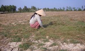 Đồng bằng sông Cửu Long: Không để người dân thiếu nước sinh hoạt