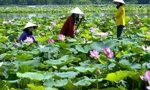 Du lịch sinh thái thúc đẩy phát triển kinh tế nông thôn vùng Đồng bằng sông Cửu Long