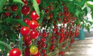 Thực trạng tăng trưởng xanh trong nông nghiệp của Việt Nam