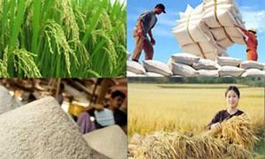 Xuất khẩu gạo sẽ thoáng hơn