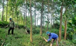 Bàn về phương pháp xác định giá thành sản phẩm tại các doanh nghiệp lâm nghiệp Việt Nam
