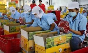 Vì sao trái cây Việt chưa rộng đường xuất khẩu?