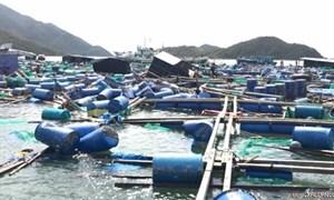 Khánh Hoà đề xuất khoanh nợ cho hộ dân bị thiệt hại nặng do thiên tai
