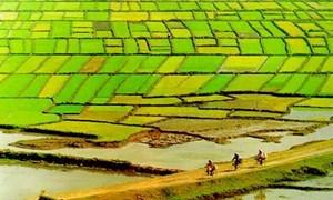 Thu xếp nguồn vốn 1 tỷ USD cho phát triển bền vững Đồng bằng sông Cửu Long