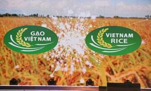 Lan tỏa thương hiệu Gạo Việt Nam