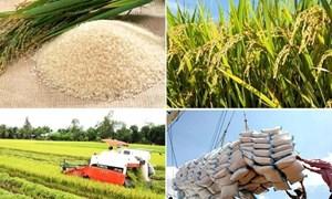 """""""Cởi trói"""" xuất khẩu gạo góp phần tăng thu NSNN"""