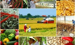 """Sẽ có thêm """"ân hạn"""" đối với chính sách tín dụng phát triển nông nghiệp, nông thôn?"""