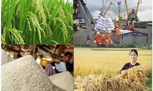 """Thị trường sẽ đào thải tình trạng """"ăn xổi"""" trong kinh doanh, xuất khẩu gạo"""