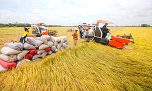 Doanh nghiệp xuất khẩu gạo có cơ hội bứt phá