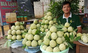 Đi tìm lời giải cho việc nông sản Việt chưa được quan tâm đăng ký bảo hộ