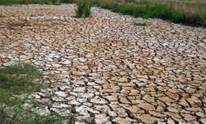Ngành Nông nghiệp: Đề xuất bố trí hơn 97 nghìn tỷ đồng ứng phó với biến đổi khí hậu