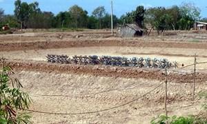 Thủy sản thiệt hại hàng tỷ đồng do xâm nhập mặn