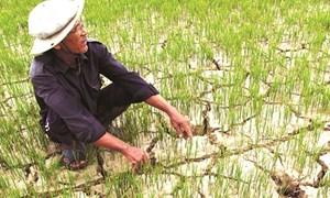 Khoảng 40.000 ha vụ Đông Xuân bị hạn hán đe dọa nghiêm trọng