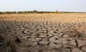 Hơn 23.600 ha lúa sẽ bị thiệt hại do khô hạn tại Trà Vinh