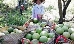 Giá trái cây tăng cao do hạn hán