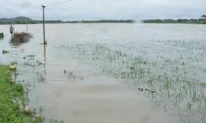 Tháng 5, thiên tai gây thiệt hại 132 tỷ đồng