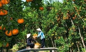 Hỗ trợ doanh nghiệp xuất khẩu trái cây chiếm lĩnh thị trường