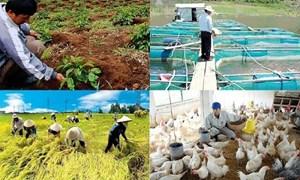 Nghị quyết 35 mở ra một tiền đề rất lớn cho phát triển nông nghiệp