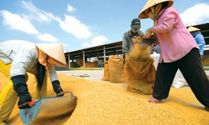 Ưu tiên xuất khẩu gạo chất lượng cao 6 tháng cuối năm