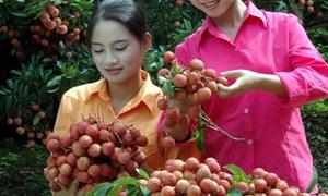 Chiếu xạ vải tại Hà Nội: Tiết kiệm 20 triệu đồng/conterner