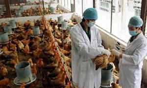 Vùng an toàn dịch bệnh được ưu tiên tham gia xúc tiến thương mại