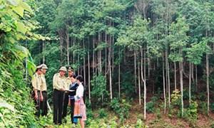 Gần 2,2 triệu ha rừng có nguy cơ bị chuyển đổi bất hợp pháp