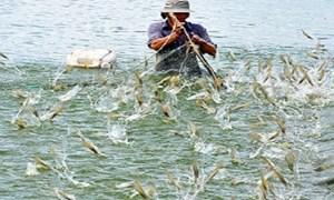 Thủy sản: Chú trọng nuôi tôm nước lợ, lấy đà tăng tưởng cuối năm