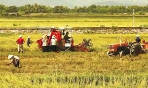 Ngành Nông nghiệp: Phấn đấu phục hồi tăng trưởng cuối năm