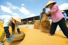 Xuất khẩu gạo vẫn trầm lắng do thiếu nhu cầu tiêu thụ mới
