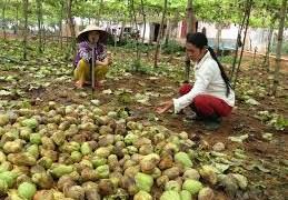 Nông sản không an toàn: Cần siết chặt quản lý theo chuỗi