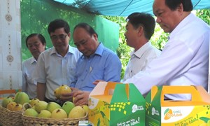 Tái cơ cấu ngành Nông nghiệp:  Hướng nâng cao chất lượng, giá trị gia tăng