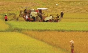 Thí điểm smartphone vào nông nghiệp