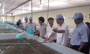 Ngành tôm Việt Nam hóa giải những thách thức