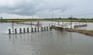 Hướng tới phát triển thành vùng nuôi tôm hàng đầu Việt Nam