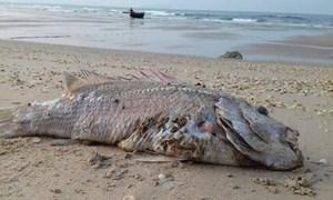Quảng Trị chủ động và khẩn trương hỗ trợ người dân bị thiệt hại do sự cố môi trường biển