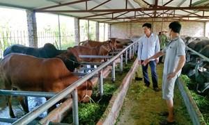Hoàn thiện chính sách phát triển kinh tế trang trại bền vững ở tỉnh Thanh Hóa