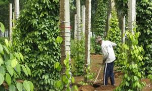 Phát triển quỹ hỗ trợ nông dân tại huyện Võ Nhai, tỉnh Thái Nguyên
