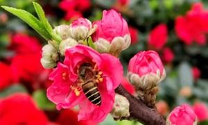 Chợ hoa Tết những ngày chống dịch