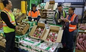 Châu Âu áp thuế 0%: Gạo, thanh long… Việt hưởng lợi