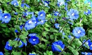 Những loài hoa nở quanh năm làm đẹp cho không gian nhà ở
