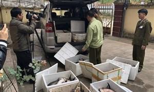 Kiểm tra chặt chẽ các doanh nghiệp nhập khẩu cá tầm
