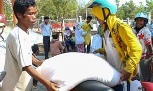 Gần 313 tấn gạo dự trữ quốc gia hỗ trợ tỉnh Hà Giang trong thời gian giáp hạt