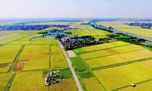 Miễn thuế sử dụng đất nông nghiệp trong thời hạn 5 năm từ 2021-2025